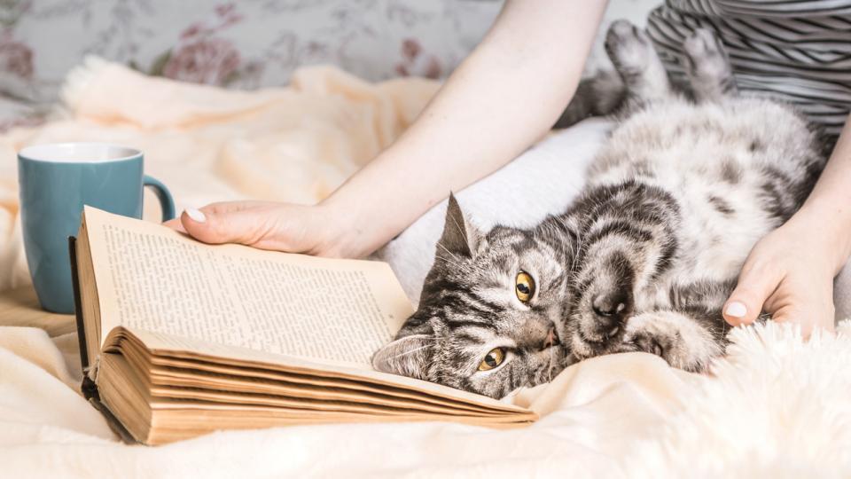 дневен котка