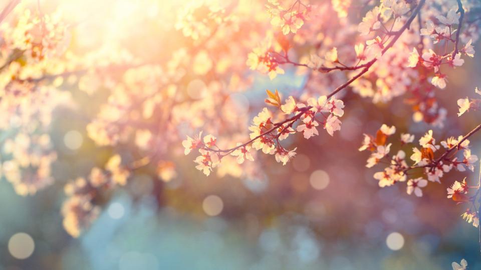 пролет природа