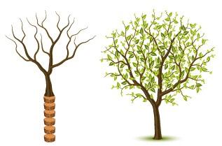 Веднъж надробен на парчета, също както и нарязаното дръвче, колагенът не може да се възстанови отново