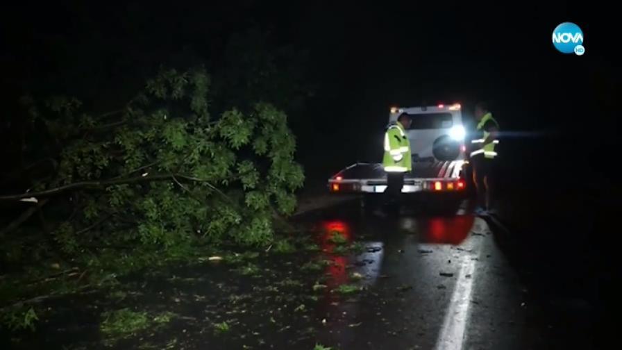 Буря в Русе, паднали дървета предизвикаха катастрофи