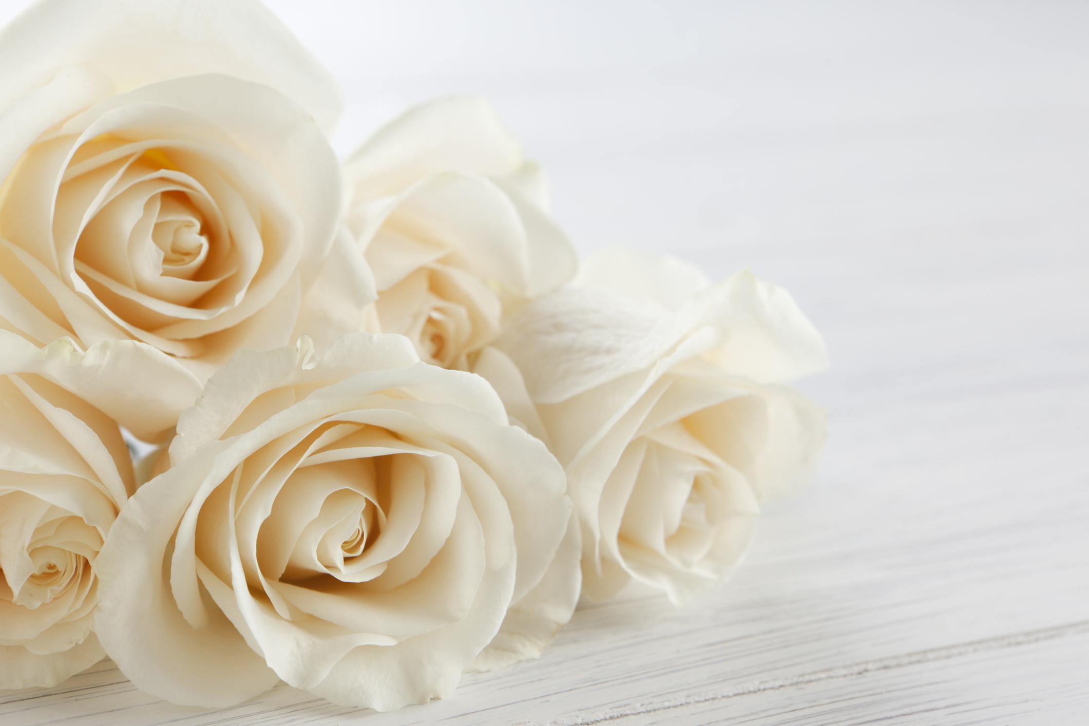 <p>Бяла роза -&nbsp; ознчава &quot;сърце, което не познава любовта&quot;.&nbsp;</p>