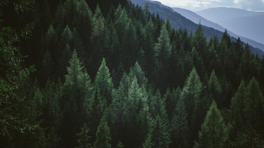 И Агенцията по горите е с нов изпълнителен директор