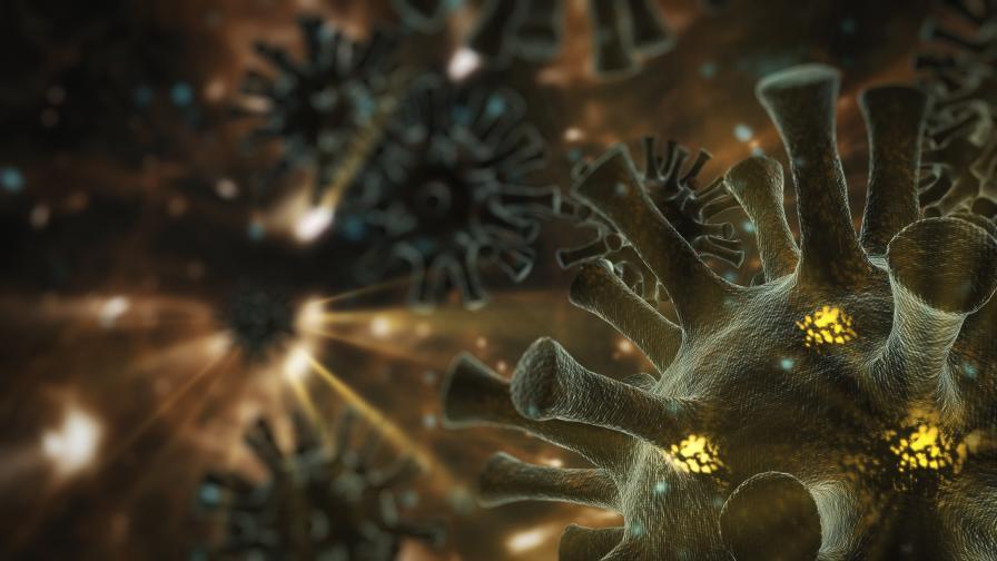 Откриха нов коронавирус, предаван от кучета