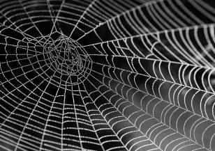 Австралийският щат Виктория се покри с огромни паяжини