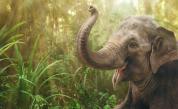 Слон тършува в кухнята на семейство (ВИДЕО)