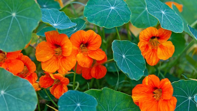 Баба знае: ето кои са най-хубавите летни билки