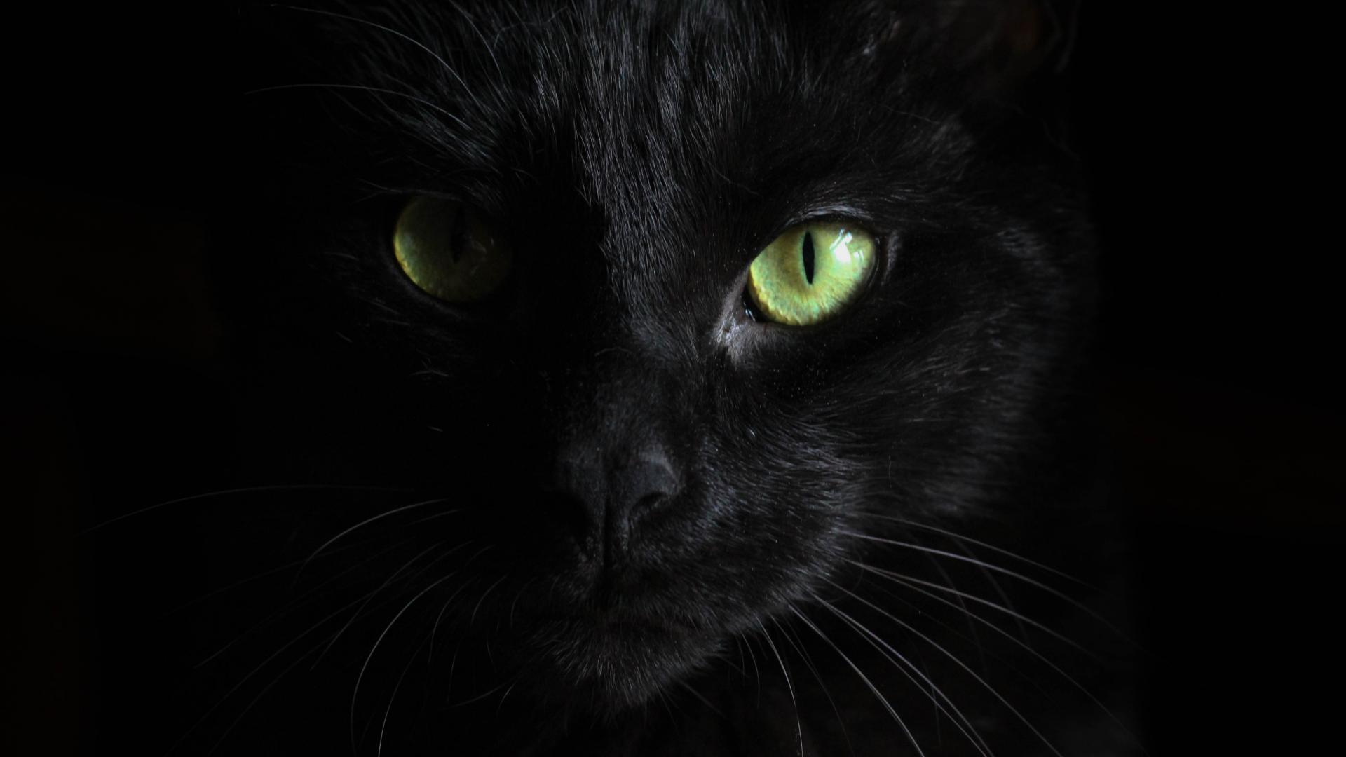 голяма черна котка