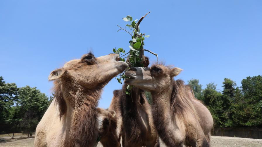 Новите очарователни обитатели на зоопарка в...