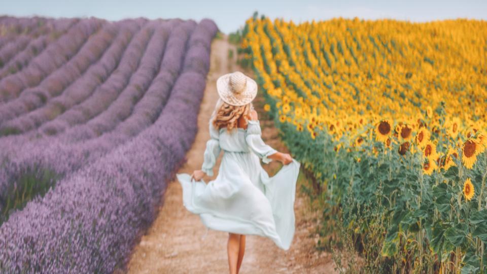 жена лято природа поле цветя слънчоглед лавандула слънце