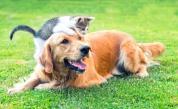 Тези породи кучета успешно съжителстват с котки