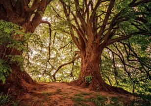 Защо са важни старите гори