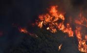 Кошмар, пожарът край Атина е извън контрол, евакуация