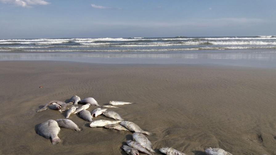 Стотици мъртви риби бяха открити в Южна Испания