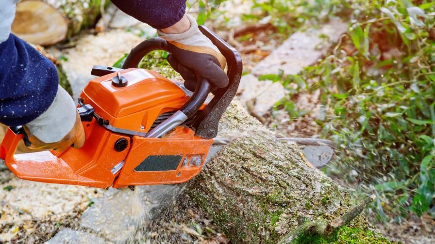 Дърво падна и уби 9-годишно дете