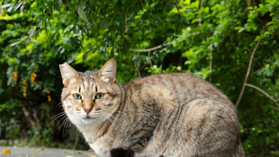 Котка оцеля след 52 дни в празна къща, хранила се с хартия