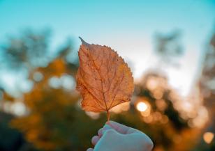 Лято в понеделник, от вторник – есен
