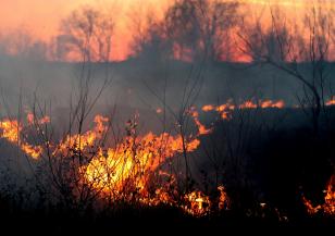 Рекордни количества въглероден диоксид са отделили пожарите през изминалото лято