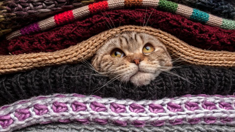 котка одеала зима хороскоп