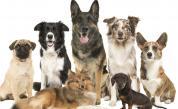 И кучетата страдат от поведенческо разстройство