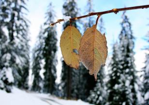 Димитровден бележи началото на зимата
