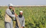 Талибаните въвеждат схема