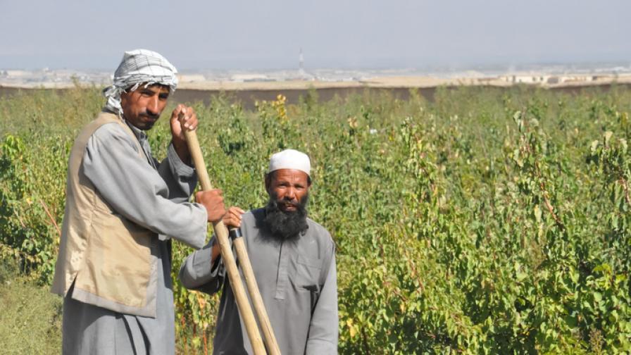 <p>&quot;Храна срещу работа&quot; за безработни в Афганистан&nbsp;</p>
