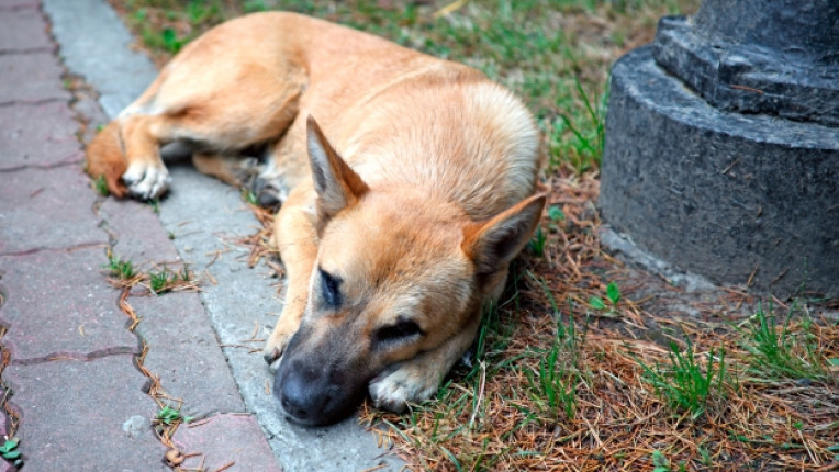 бездомни кучета организация Четири лапи хуманност домашни любимци кастрация спешни