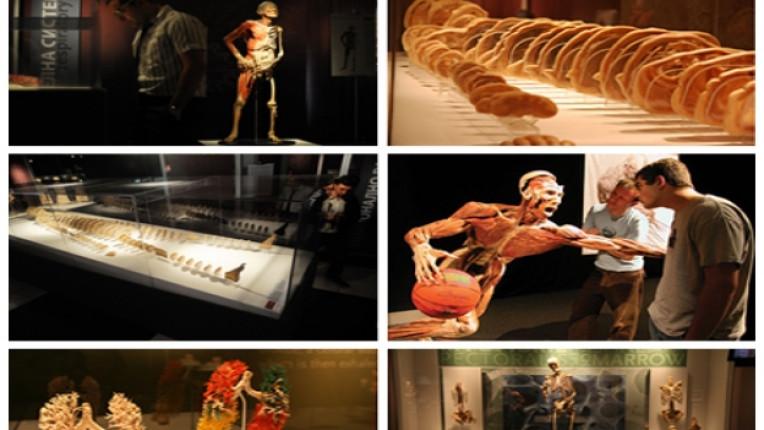 международна изложба анатомия образователна цел скандално мнение тяло органи ЦУМ