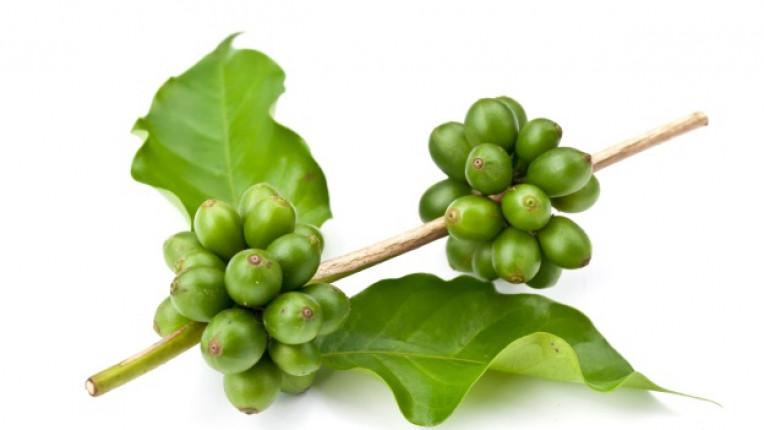 зелено кафе отслабване натурална напитка козметика псориазис холестерол кофеин диабет