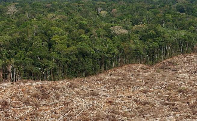 Амазонските гори ще се превърнат в савана
