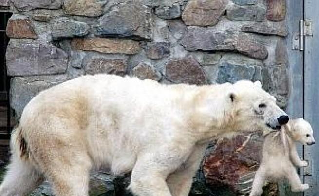 Най-смъртоносните животни на земята