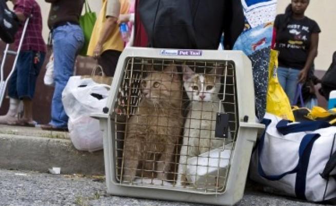 Създават авиокомпания за домашни животни