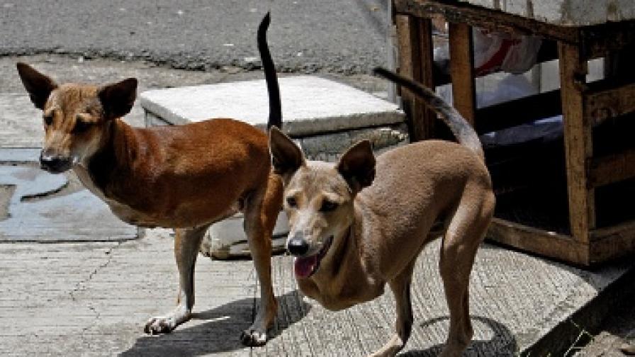 Минувачите наричат Кют и Бамби кучета кенгура