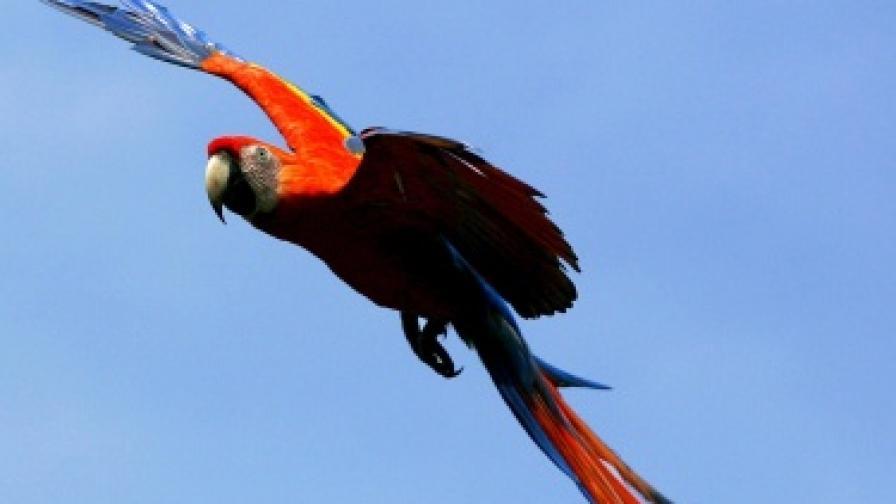 За Коста Рика опазването на дивата природа е национален приоритет