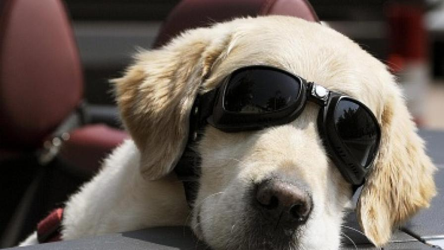 Кучетата са умни колкото 2-годишно дете