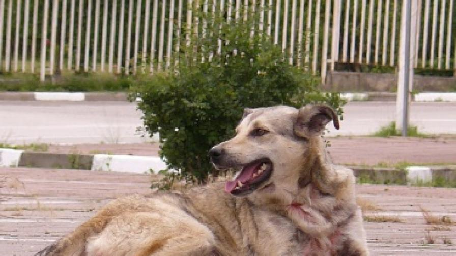 Кучета убиха 5-годишно момиченце