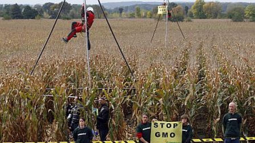 """Протест на """"Грийнпийс"""" срещу ГМО пшеницата"""