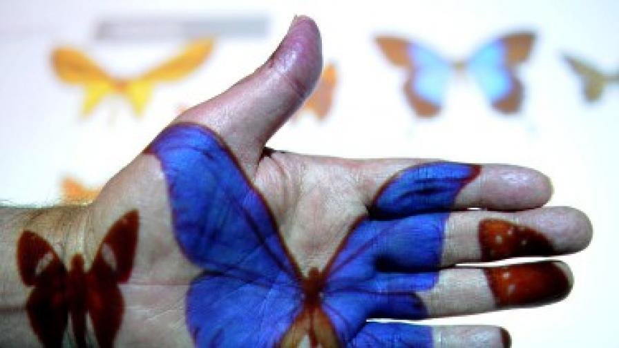 Пеперудите в Европа пред изчезване