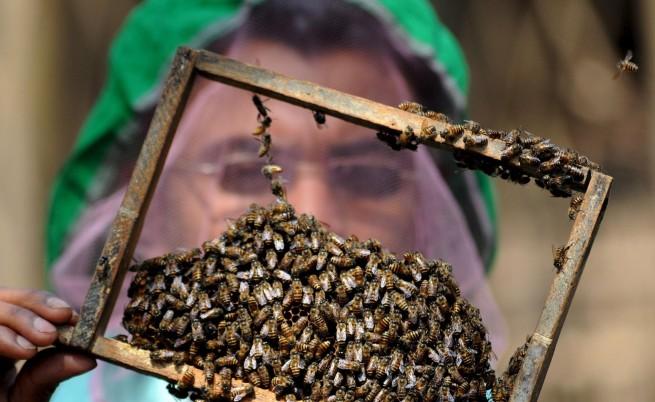 Пчелите се върнаха законно в Ню Йорк
