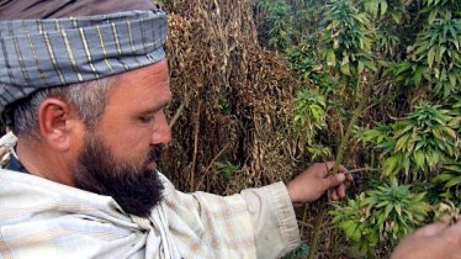 Афганистан е водещ производител и на хашиш
