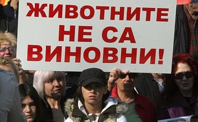 До три години затвор заради кучетата убийци в Сушево