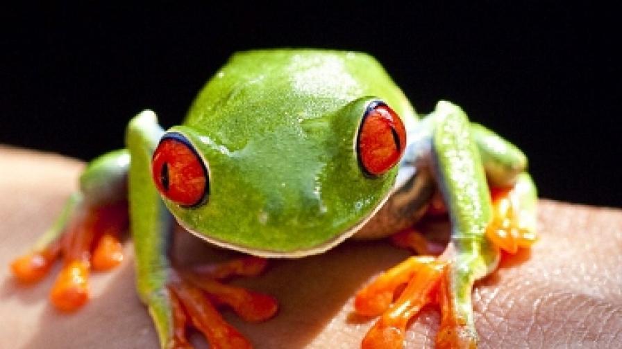 На острова на летящите жаби