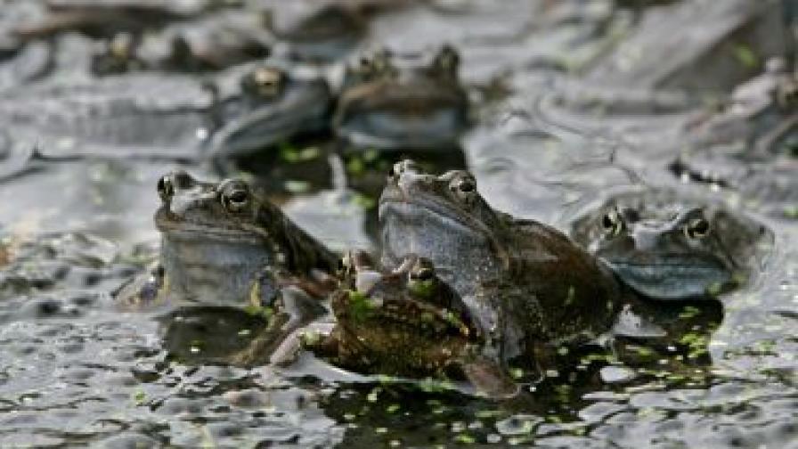 Жаби предизвикаха хаос на гръцка магистрала