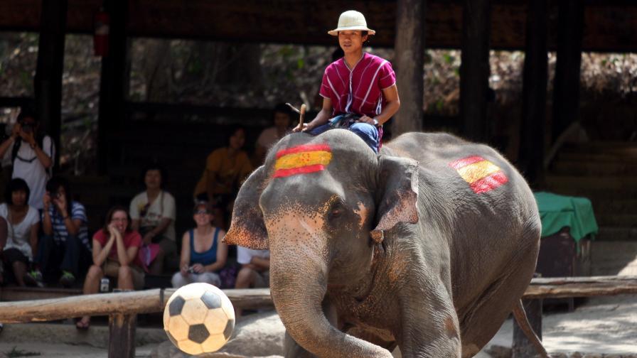 Тайландски слон, изрисуван с цветовете на френското знаме, показва футболни умения в промоционален мач преди мондиала