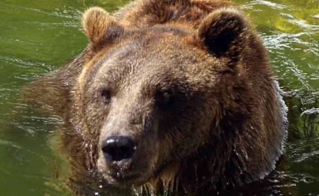 Ще ограмотяват живеещите в райони с мечки