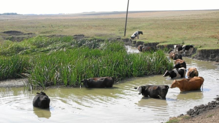 Правителството одобри помощи за земеделските производители