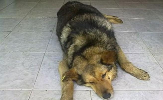 Дело в Шумен за убийството на бездомно куче