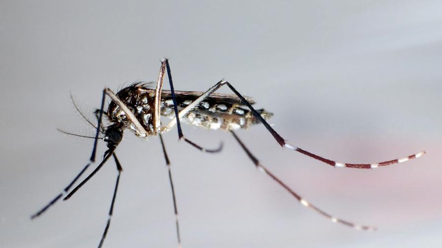 С какво да се пазим от комари
