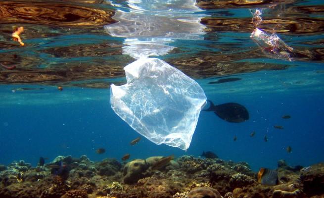 Фитопланктонът намалява драстично, с него и кислородът