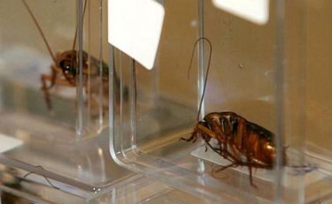 Хлебарки срещу бактериите